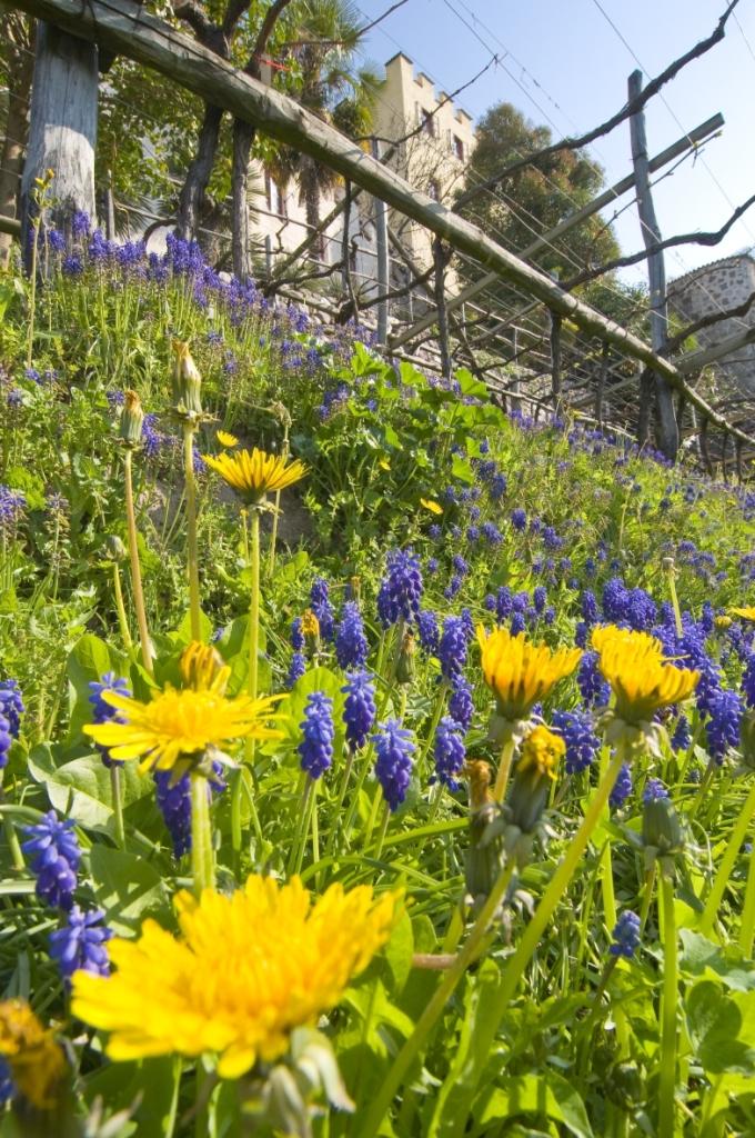 Distesa-di-fiori-Trauttmansdorff
