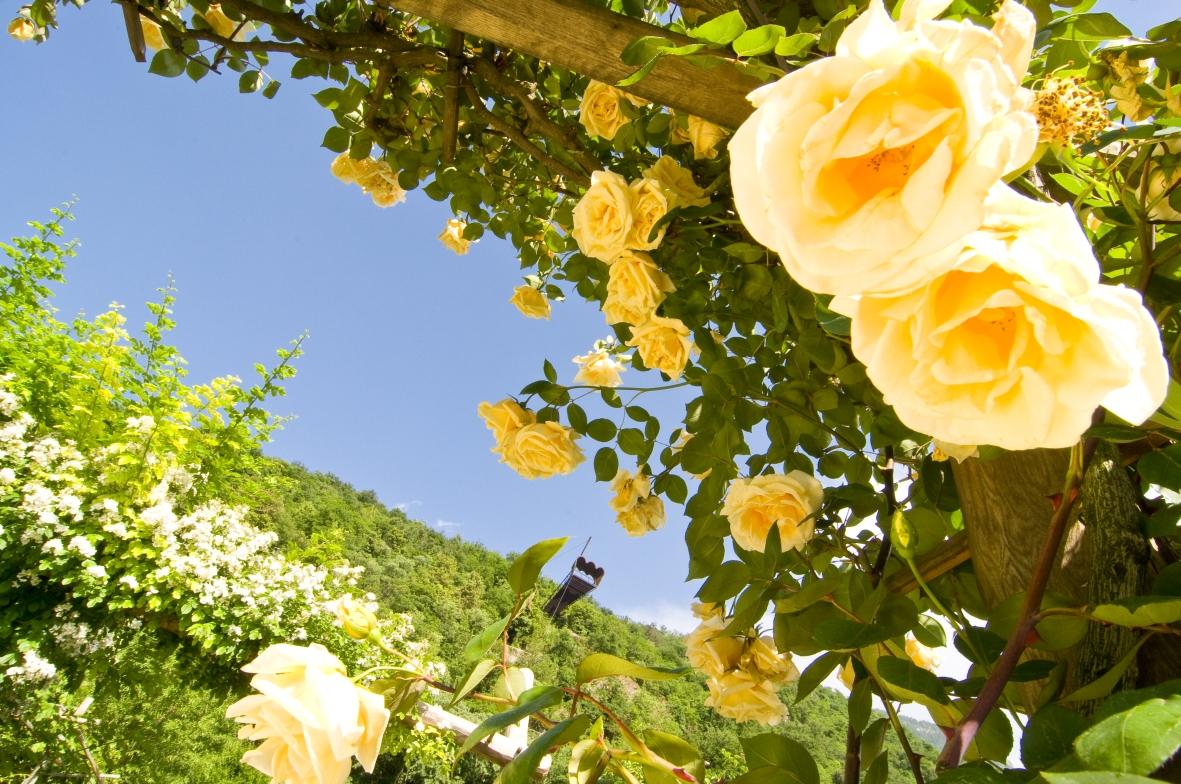 Nei giardini di sissi u2013 bello di mamma